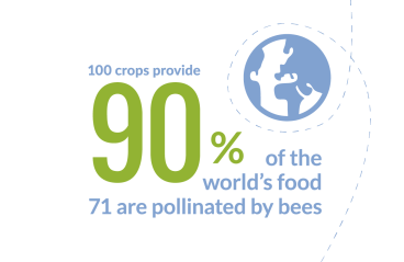 Pollinator Plan Infographics_global food