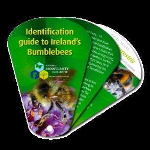bumblebee-swatch