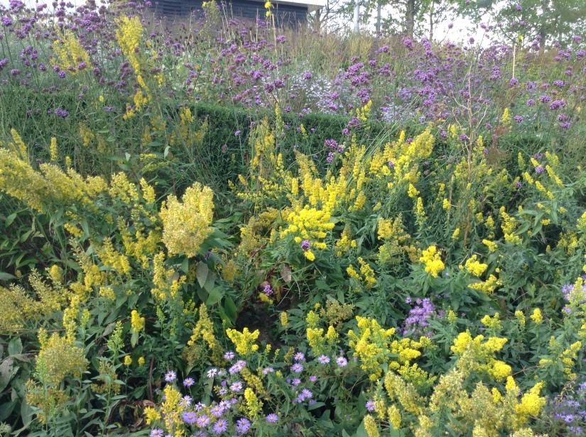 Pollinator friendly bed_Peter Cuthbert