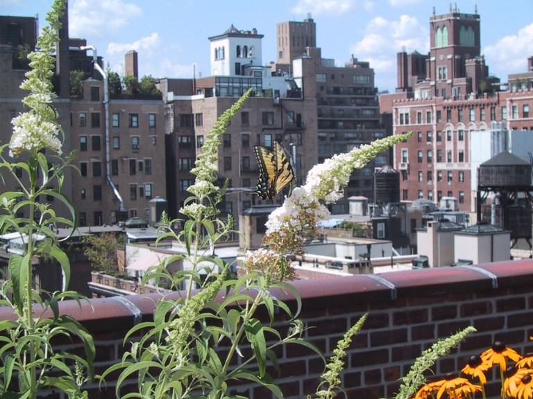 pollinator-friendly-rooftop-garden