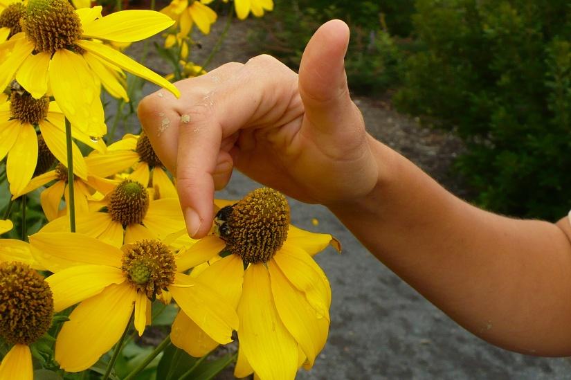 Bumblebeepetting