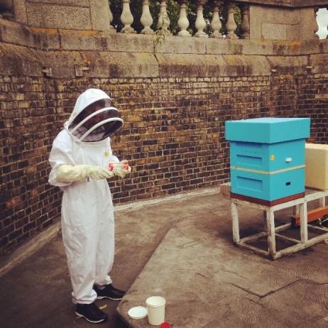 urban bee 3