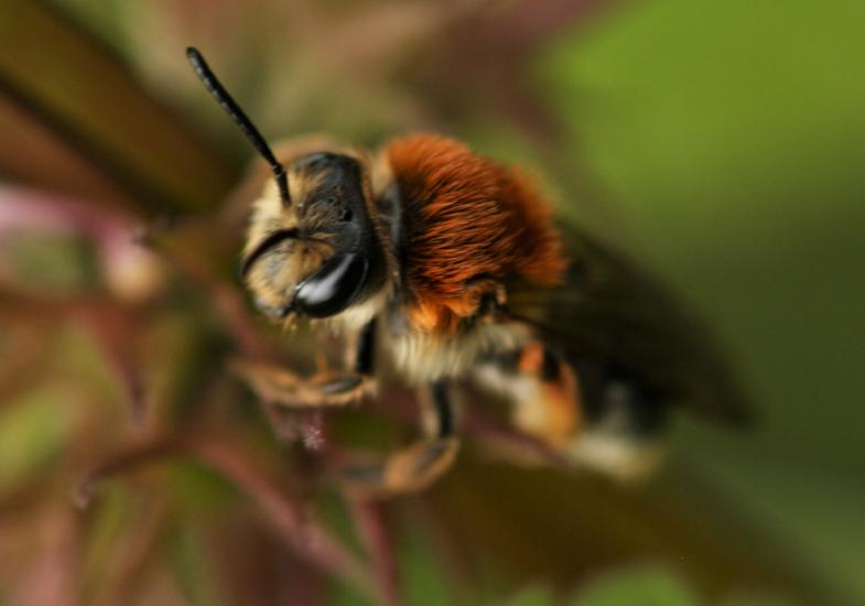 laura mining bees 2